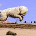 10 gode råd til en strandtur med din hund
