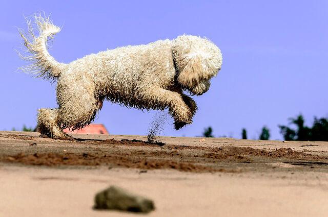 Strandtur med din hund