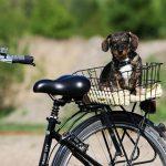 10 råd til dig der gerne vil cykle med din hund