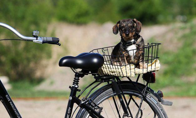 10 råd til dig, der gerne vil cykle med din hund