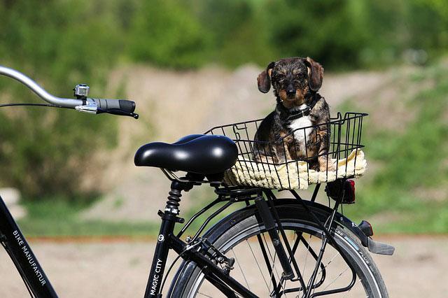 Cykle med hund