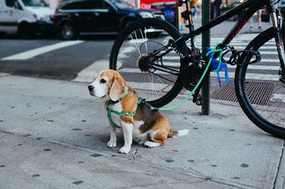 Hund ved cykel