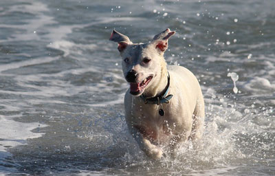 Hund i vandet