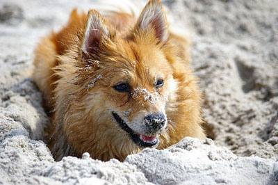 Hund i sandet