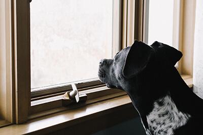 Alene hjemme træning af hund
