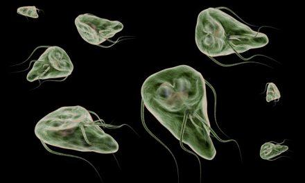 Den oversete tarmparasit – Giardia