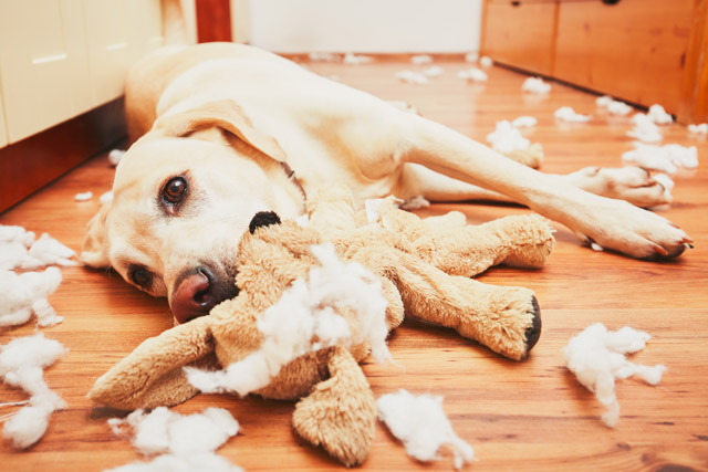 giardia smitte hund menneske