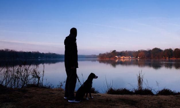 Derfor skal du lufte din hund med lys i mørke
