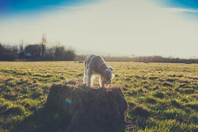 Dogparkour i marken