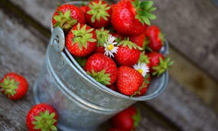 Må hunde spise jordbær?