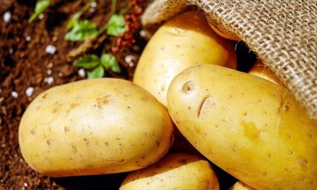 Må hunde spise kartofler?