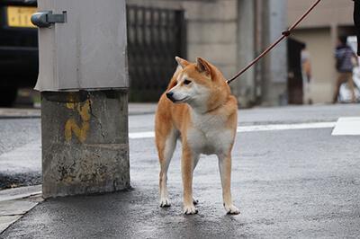 Fysisk aktivering af hund