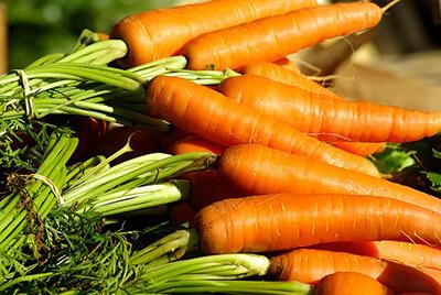 hunde gulerødder