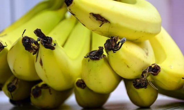 Må hunde spise banan?