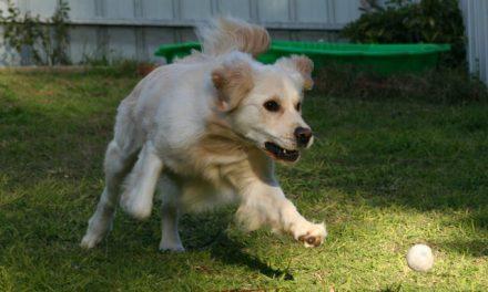 13 ting der kan stresse din hund