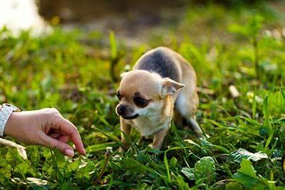 Bange hund