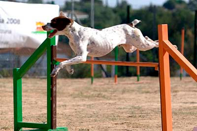 Hund springer højt