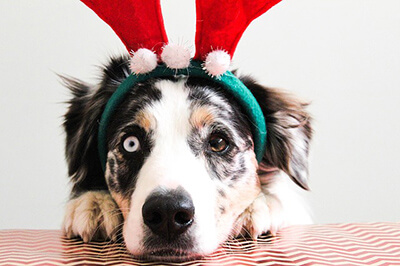 Jul kan stresse din hund