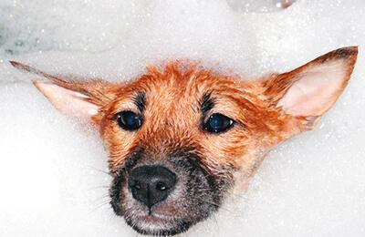 Hund i bad