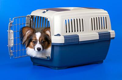 Hund i transportkasse