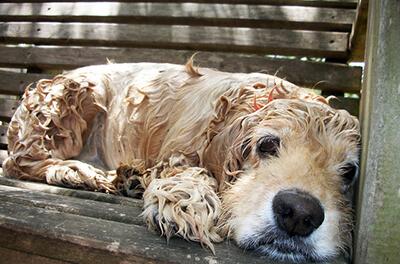 Hund der har været i bad