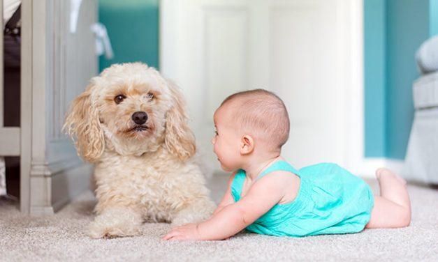 10 allergivenlige hunderacer