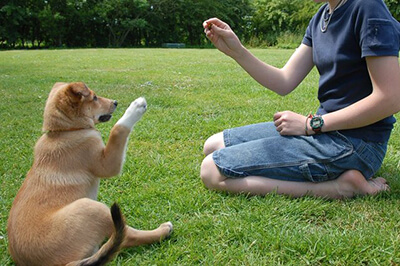 Hundetræning