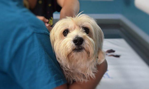 Hvor ofte skal hunde vaccineres?