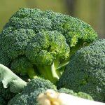 Må hunde spise broccoli?
