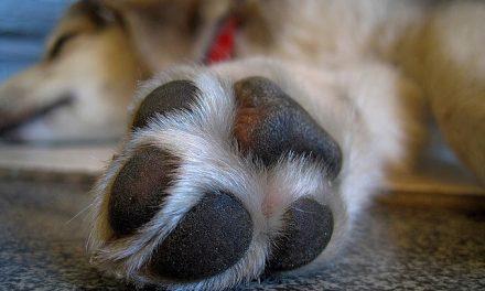 Potevoks til hunde – Indeholder skadelige stoffer