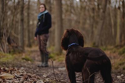Spor med en hund i skoven