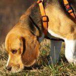 Sportræning – Gå spor med din hund