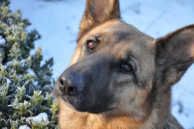 Hund tidligt på luftetur nytårsaften