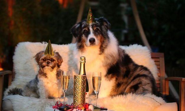 Hunde og Nytårsaften – Her er 7 gode råd