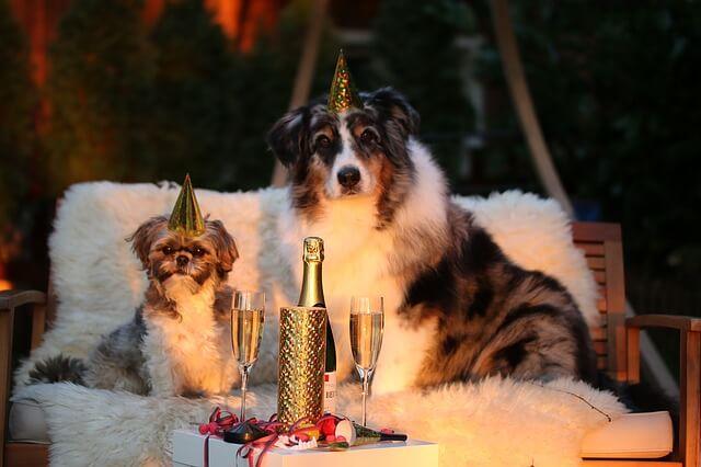 Hunde nytårsaften