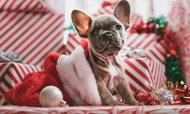Julegave til hunden – Her er 6 forslag