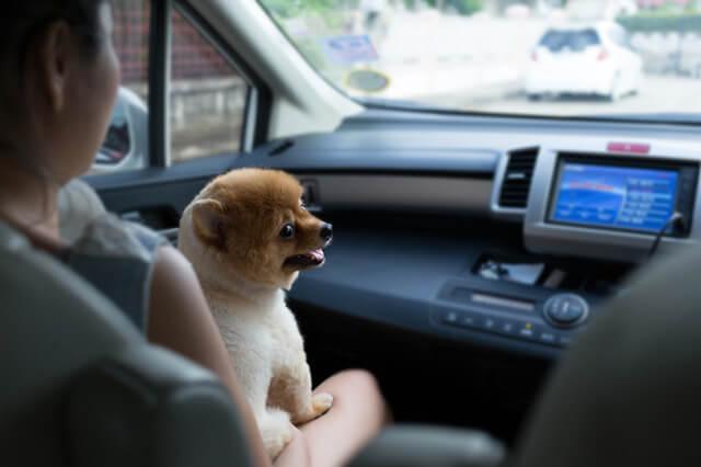 Hvalp der er ude at køre i bil