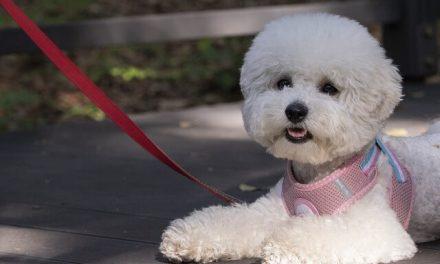 Efterlad aldrig din hund alene foran en butik