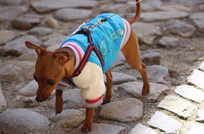 Hund med tøj på