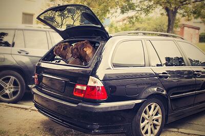 2 hunde i bil