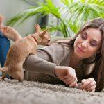 Hvorfor humper hunde dig og alt andet?