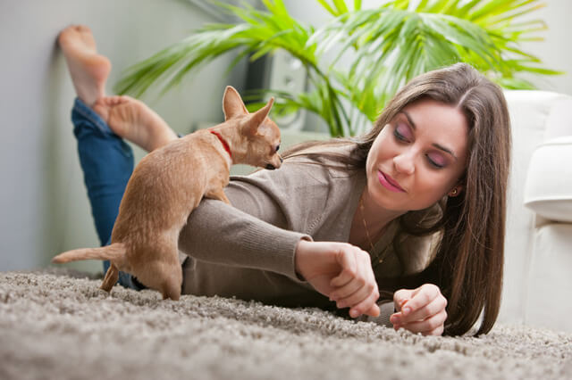 Hvorfor humper hunde?