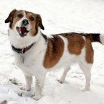 Kan din hund tåle den bidende kulde?