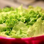 Må hunde spise salat?