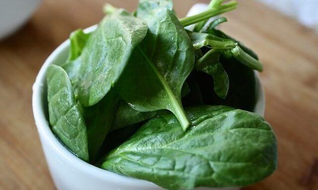 Må hunde spise spinat?