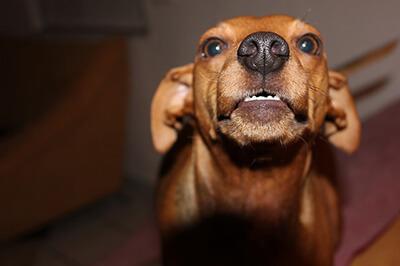 Stress hos hund