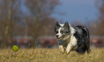 Stress-lege er skadelig aktivering af din hund