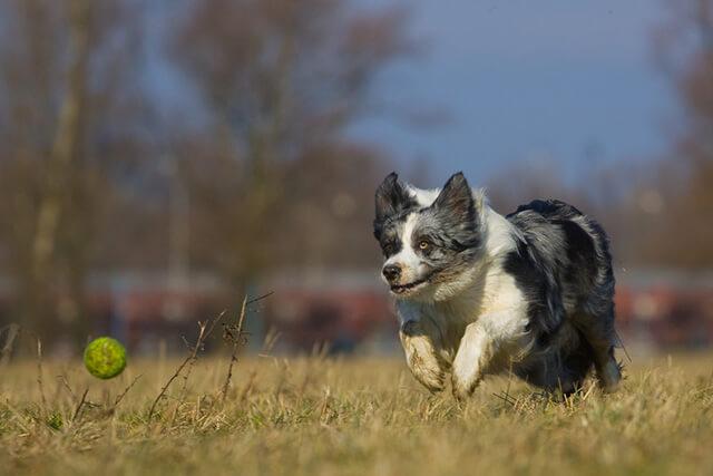 Stress-lege med hund
