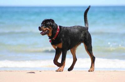 Hund på en starnd sydpå