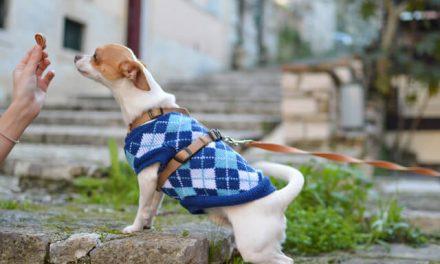 Sjove aktiviteter med din hund